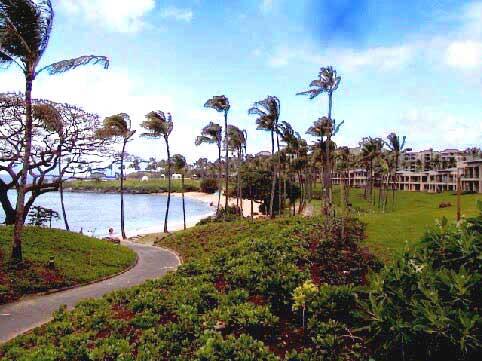 Coconut Grove Kapalua